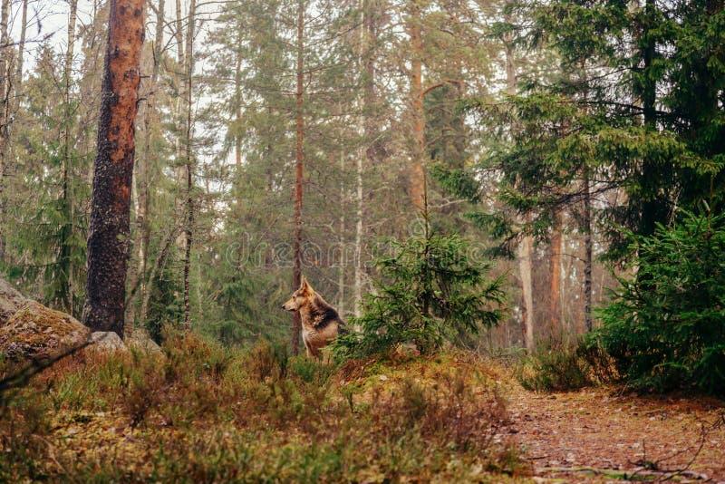 Perro en el bosque foto de archivo libre de regalías