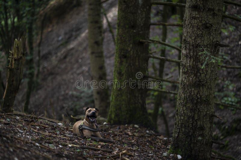 Perro en el bosque foto de archivo