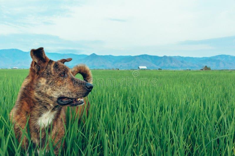 Perro en el campo fotografía de archivo