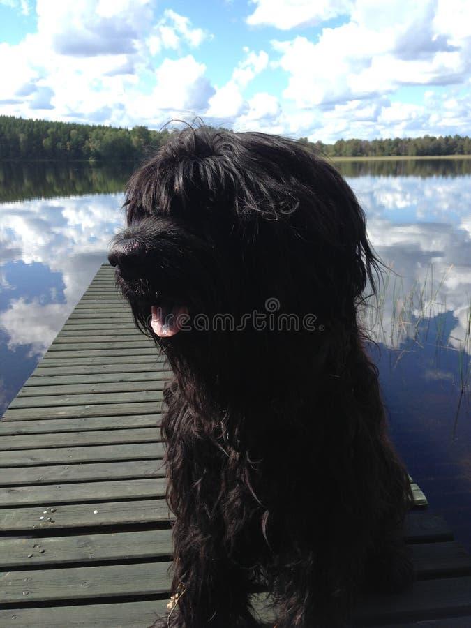 Perro en el embarcadero de madera fotografía de archivo