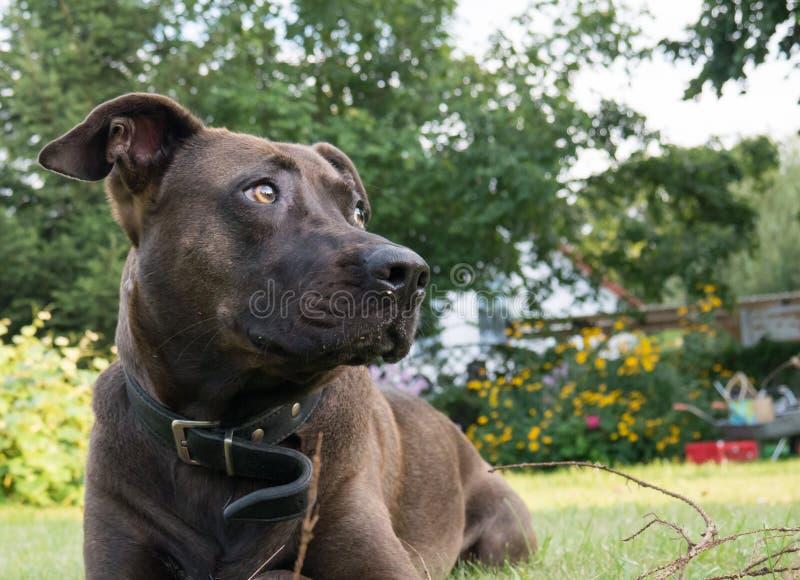 Perro en el jardín fotos de archivo