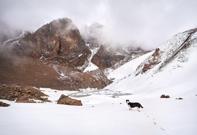 Perro en el lago nevoso de la montaña fotografía de archivo libre de regalías