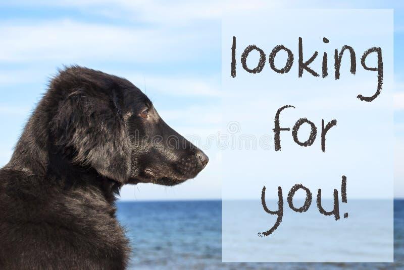 Perro en el océano, texto que le busca fotografía de archivo