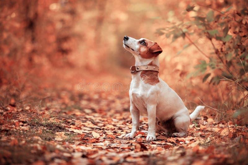 Perro en el otoño foto de archivo
