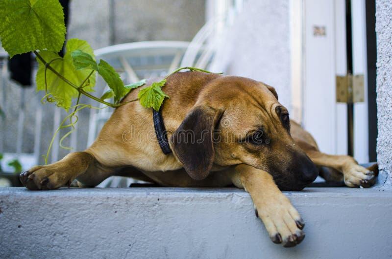 Perro en el pórtico fotografía de archivo libre de regalías
