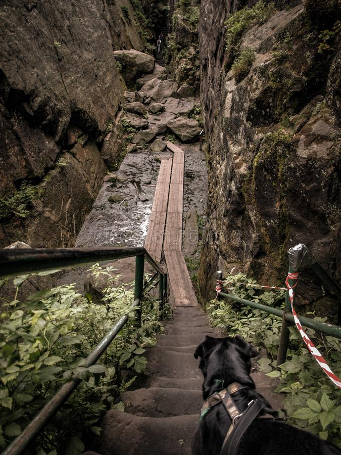 Perro en el rastro de montaña fotos de archivo
