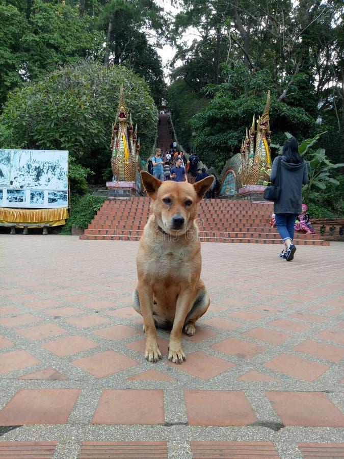 perro en el templo del thep del soi foto de archivo