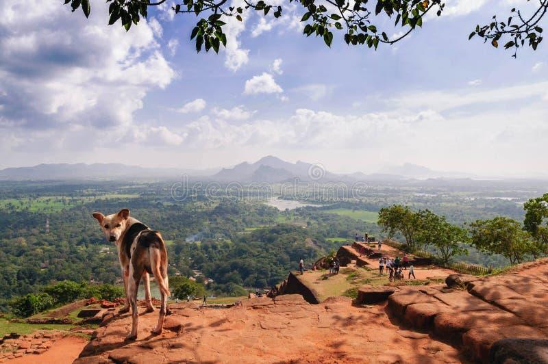 Perro en el top de la roca de Sigiriya foto de archivo