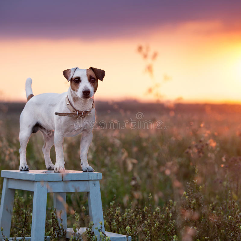 Perro en el verano fotos de archivo