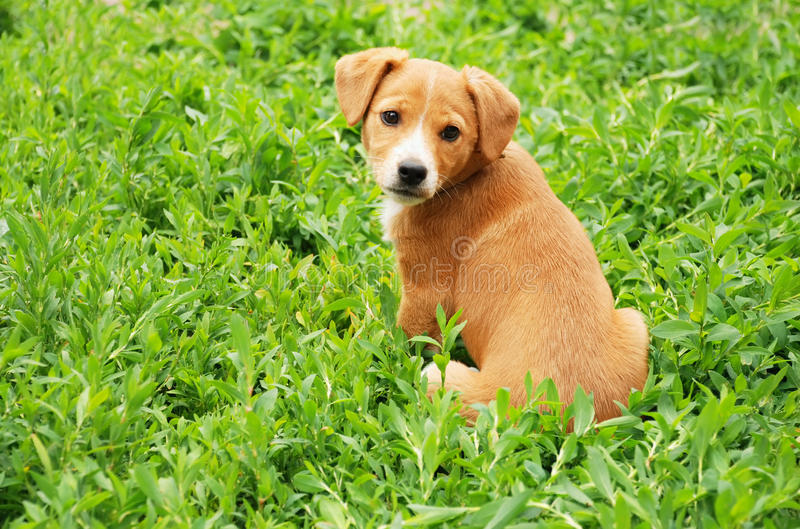 Perro en hierba imagenes de archivo