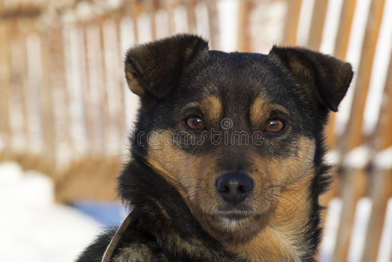 Perro en invierno imágenes de archivo libres de regalías