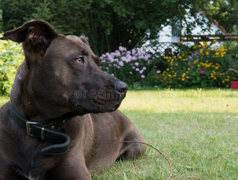 Perro en jardín foto de archivo