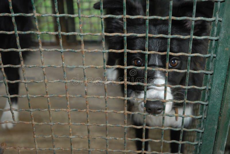 Perro en jaula doghouse imágenes de archivo libres de regalías