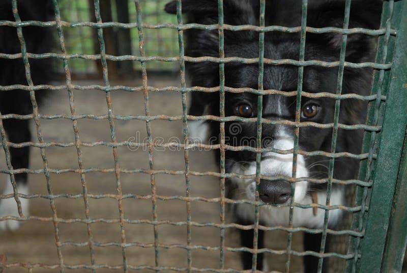 Perro en jaula doghouse abandonado y triste fotografía de archivo libre de regalías