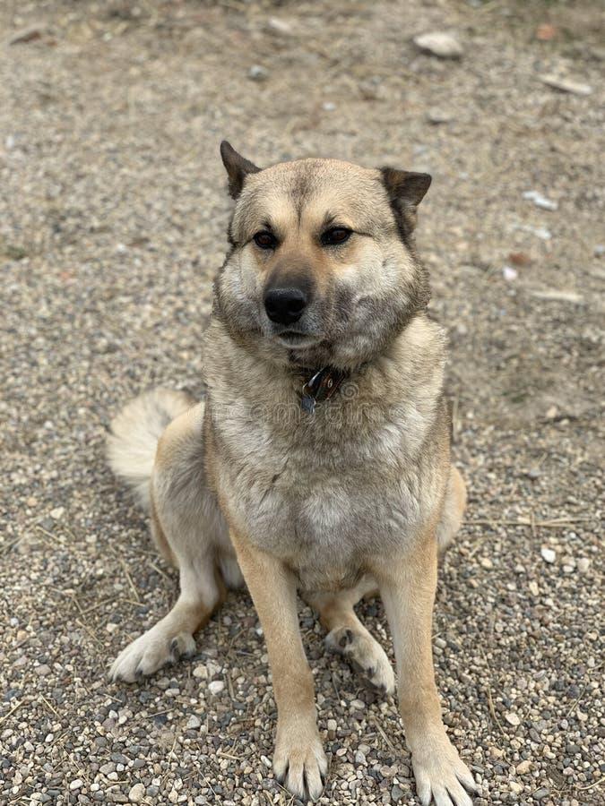 Perro en la arena imagenes de archivo