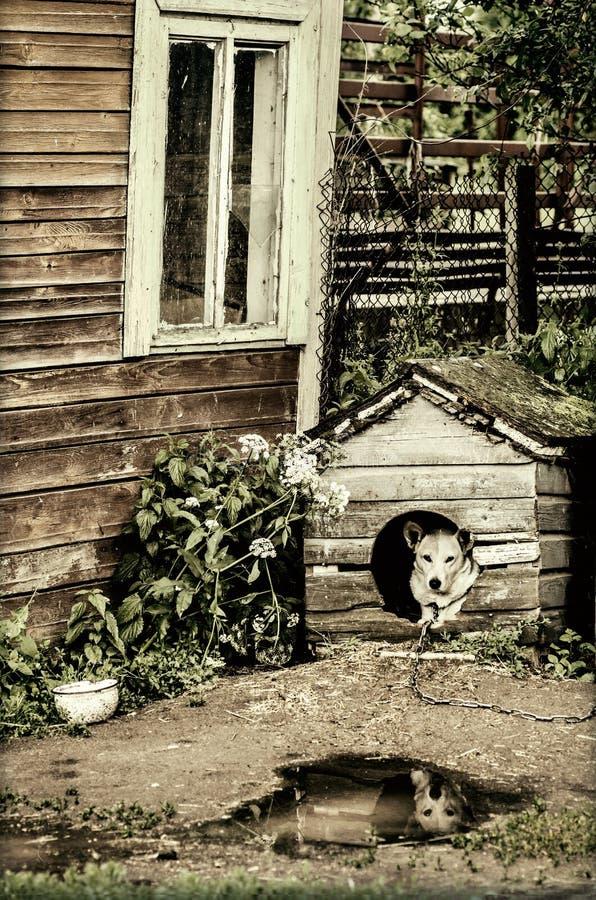 Download Perro En La Caseta De Perro Imagen de archivo - Imagen de país, perrera: 42442199
