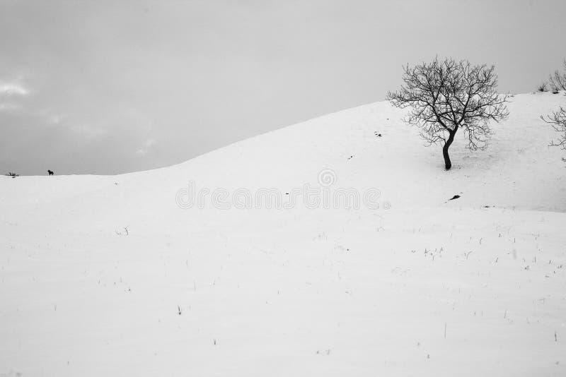 Perro en la cima de una colina fotos de archivo libres de regalías