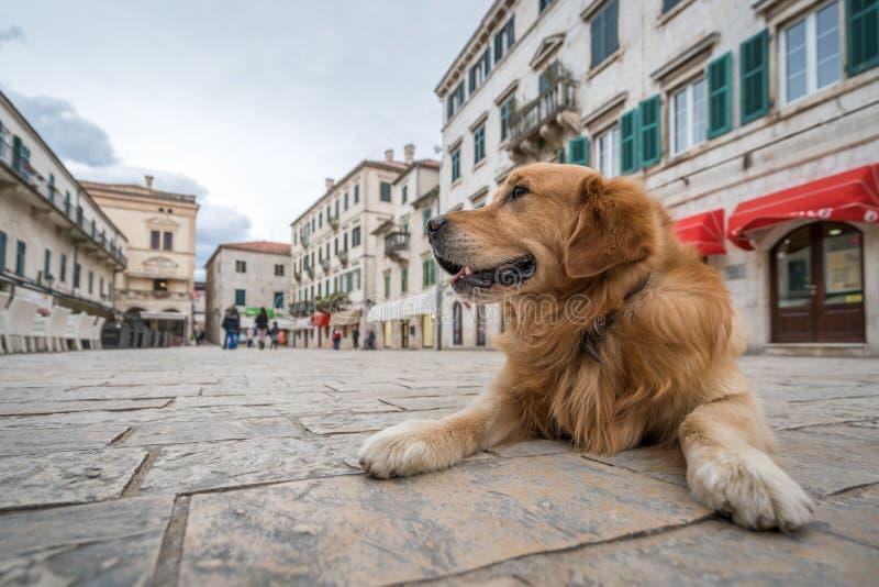 Perro en la ciudad vieja en Kotor fotos de archivo libres de regalías