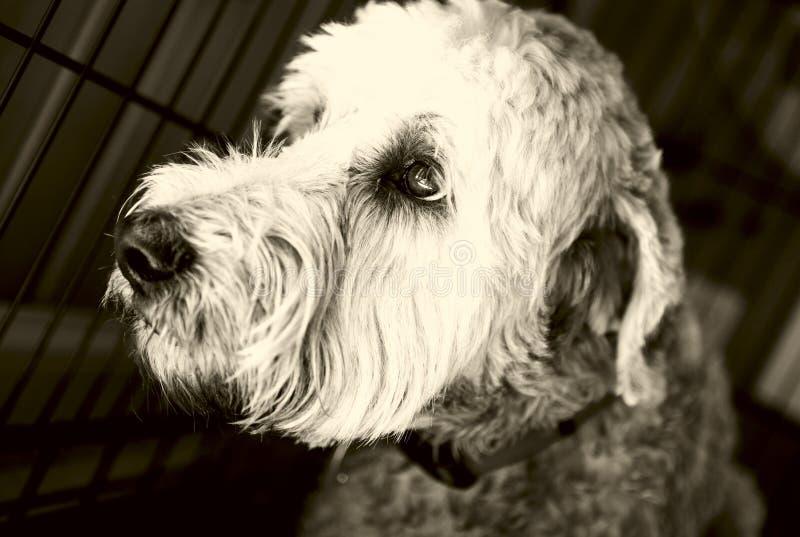 Perro en la desesperación fotos de archivo