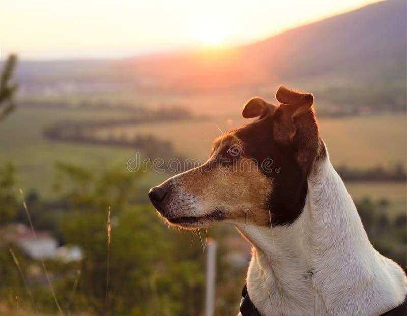 Perro en la naturaleza del slovak foto de archivo