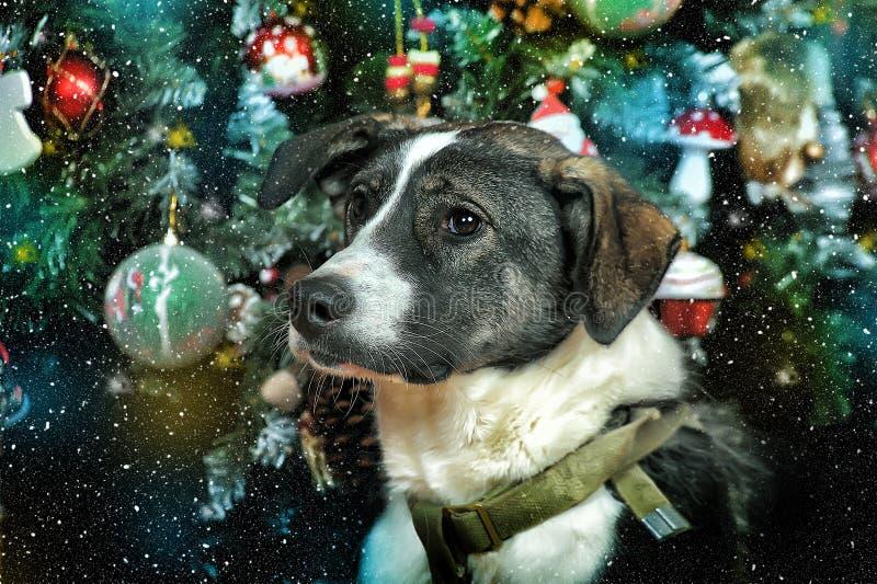Perro en la Navidad foto de archivo libre de regalías