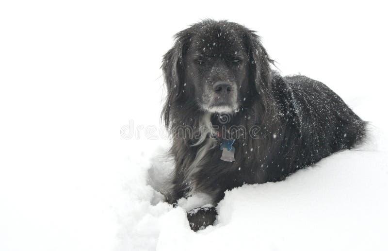 Perro en la nieve fotografía de archivo