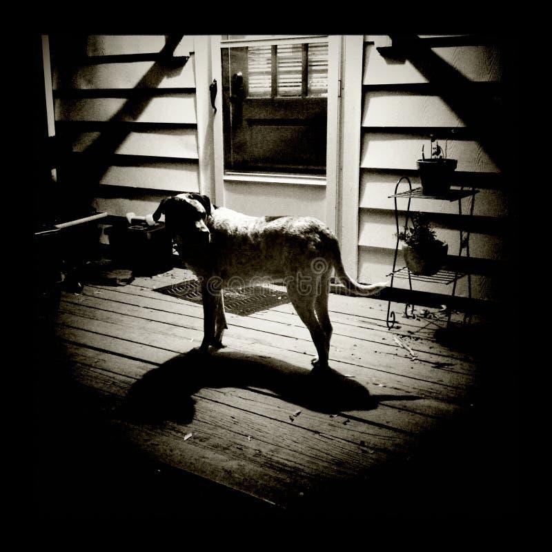 Perro en la noche foto de archivo