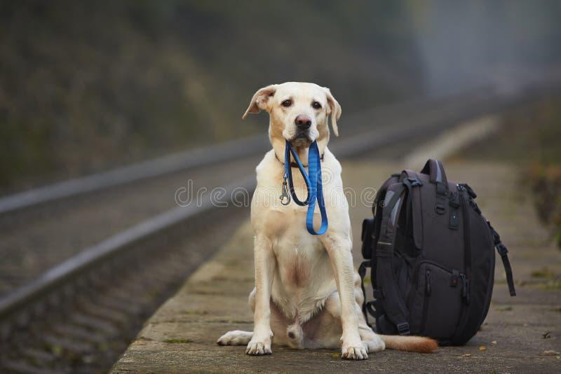 Perro en la plataforma ferroviaria foto de archivo libre de regalías