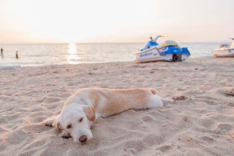 Perro en la playa fotografía de archivo libre de regalías