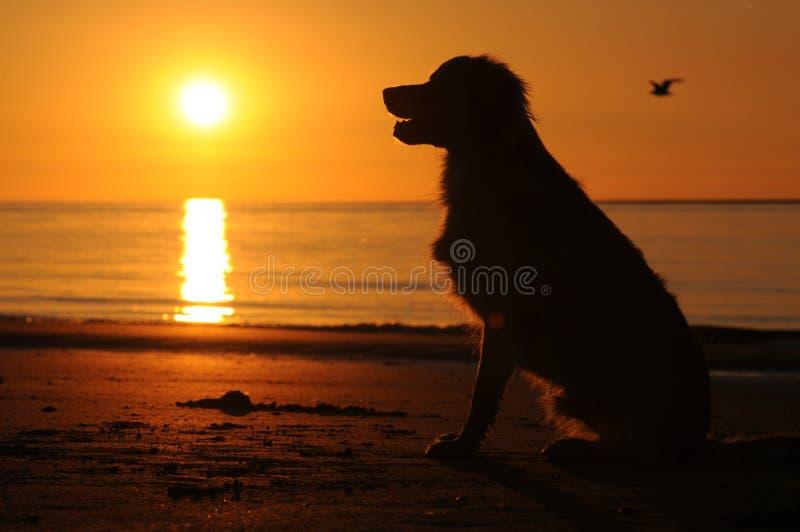 Perro en la playa con puesta del sol imagenes de archivo