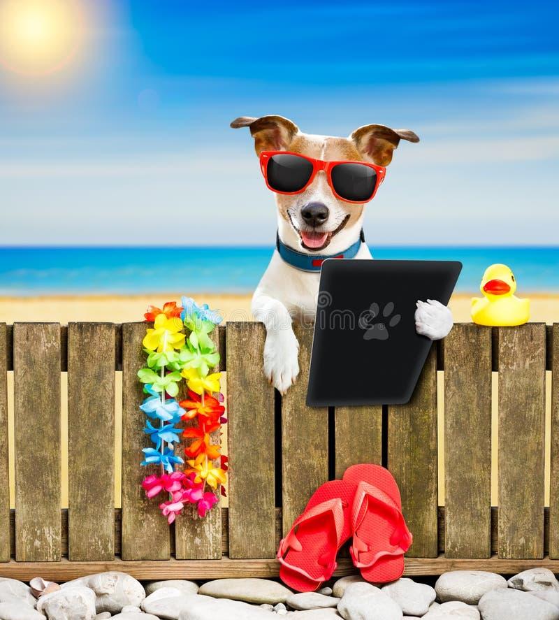 Perro en la playa el días de fiesta de las vacaciones de verano imagenes de archivo