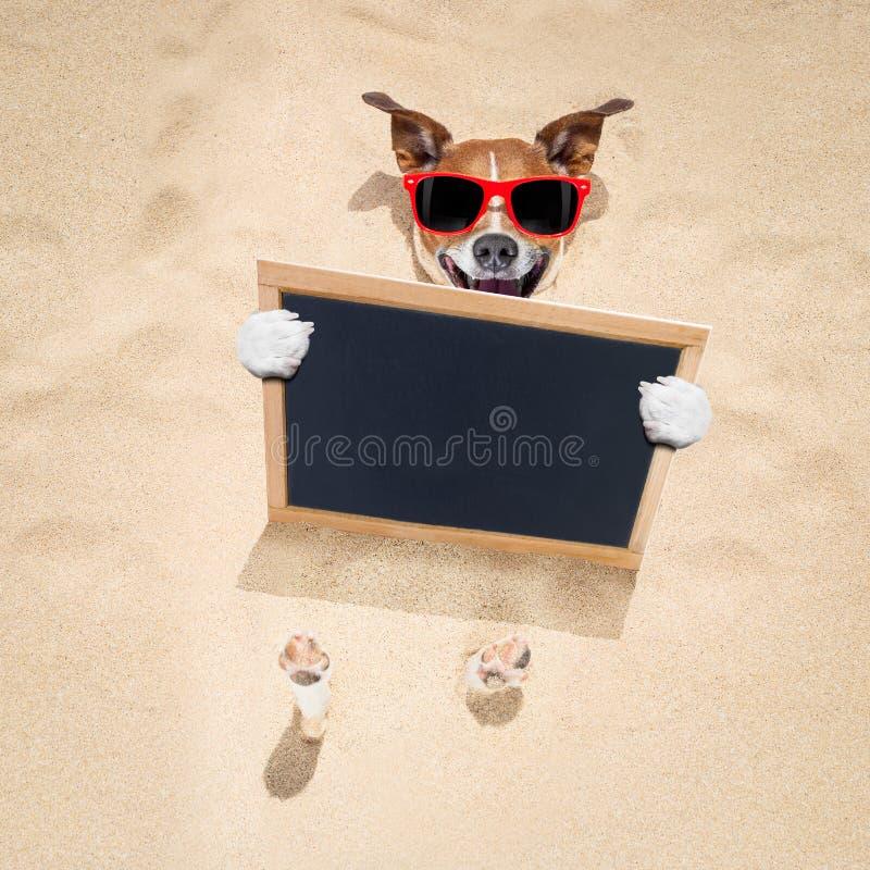 Perro en la playa y la bandera imágenes de archivo libres de regalías