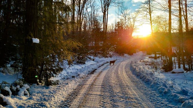 Perro en la puesta del sol foto de archivo
