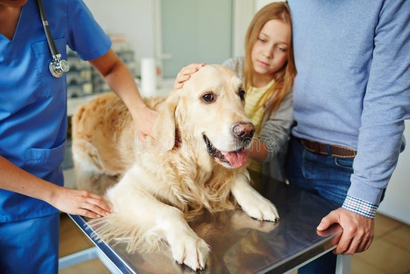 Perro en la tabla médica imágenes de archivo libres de regalías