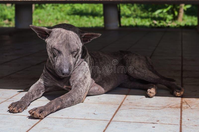 Perro en la tierra foto de archivo libre de regalías
