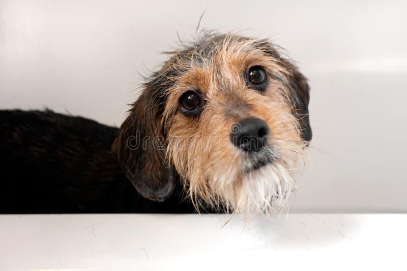 Perro en la tina de baño imagen de archivo libre de regalías