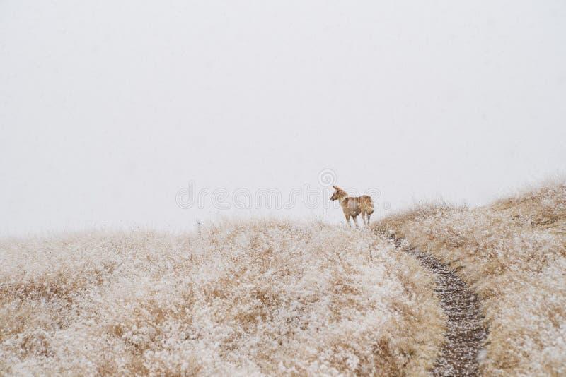 Perro en las montañas, rodeadas por la niebla durante las nevadas imagenes de archivo