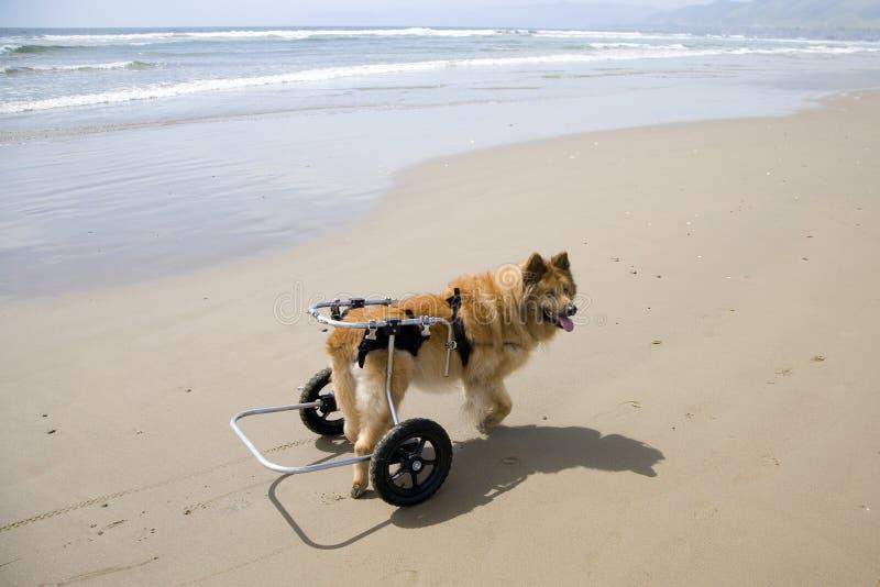 Perro en las ruedas