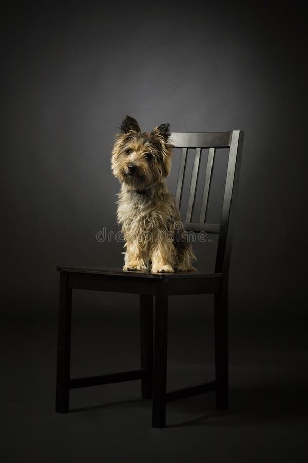 Perro en negro fotografía de archivo
