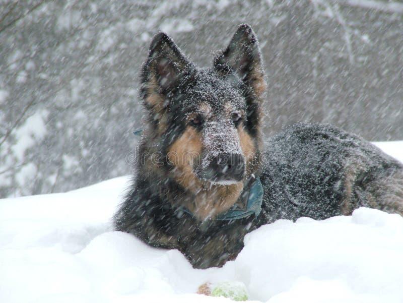 Perro en nieve foto de archivo