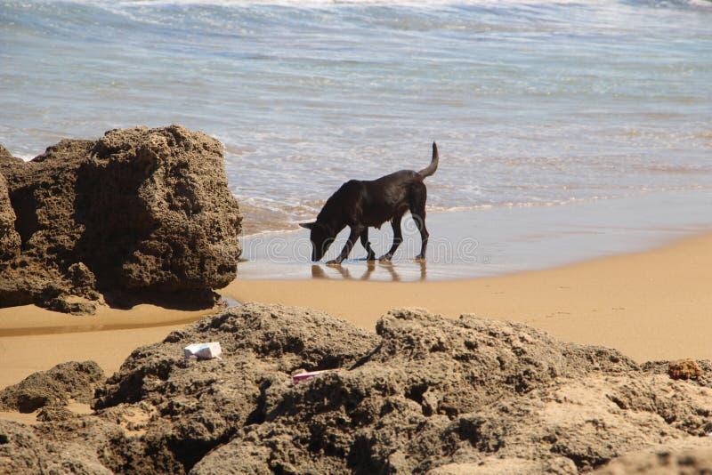 Perro en playa fotos de archivo libres de regalías