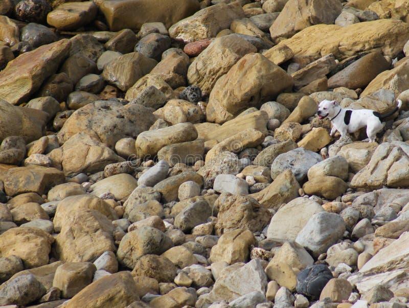 Perro en rocas imagen de archivo libre de regalías