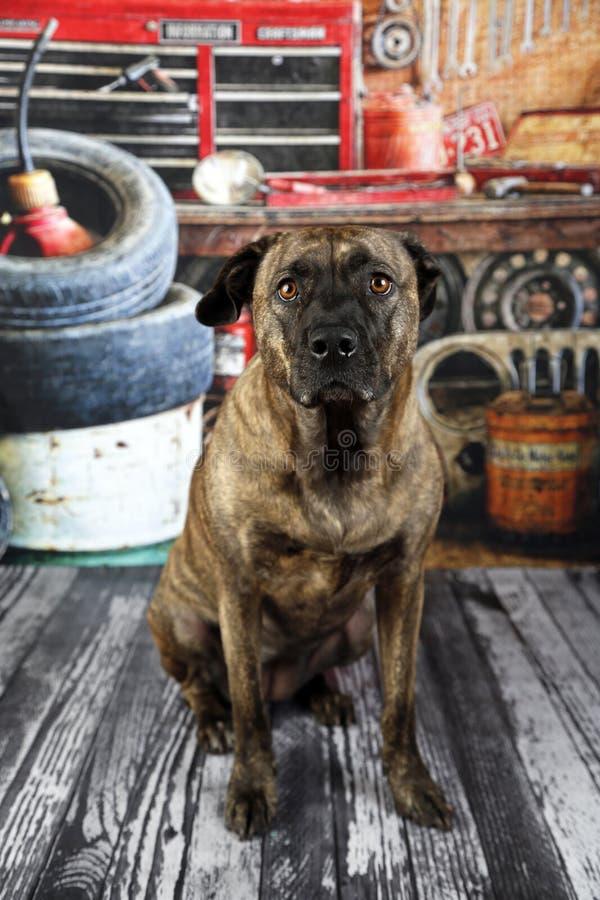 Perro en taller mecánico fotos de archivo