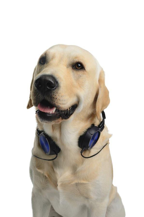 Perro en traje imágenes de archivo libres de regalías
