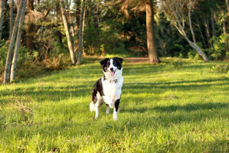 Perro en un bosque fotos de archivo
