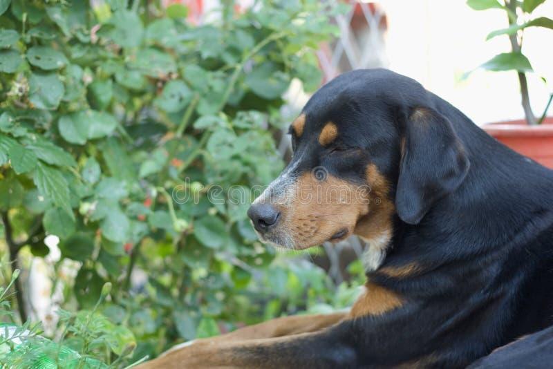 Perro en un jardín fotografía de archivo