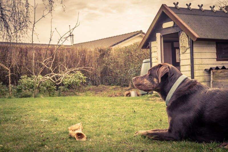 Perro en un jardín con un hueso foto de archivo