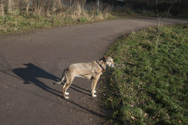 Perro en un parque foto de archivo libre de regalías