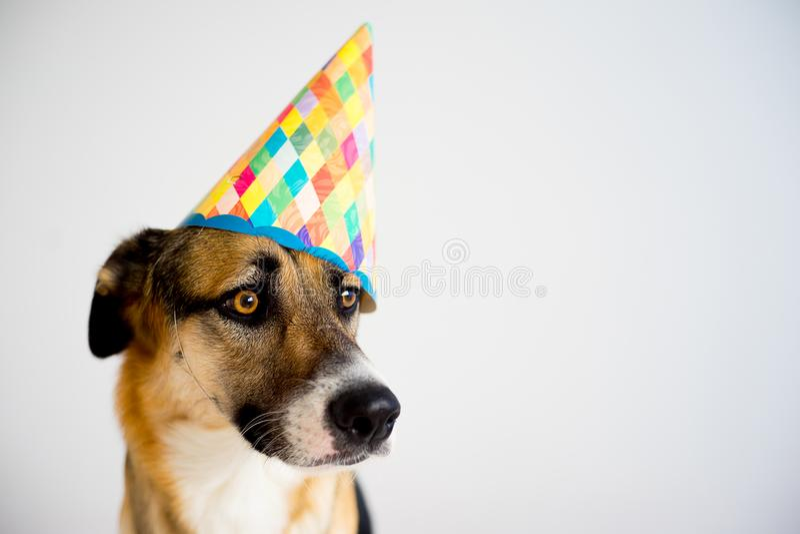 Perro en un sombrero del partido fotografía de archivo libre de regalías