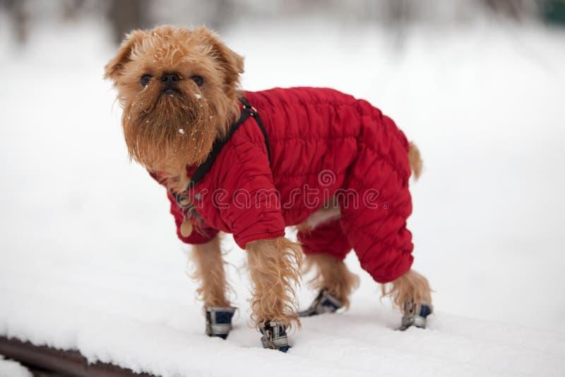 Perro en una caminata del invierno imágenes de archivo libres de regalías
